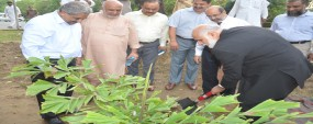 PU VC plants trees, inaugurates Family Park